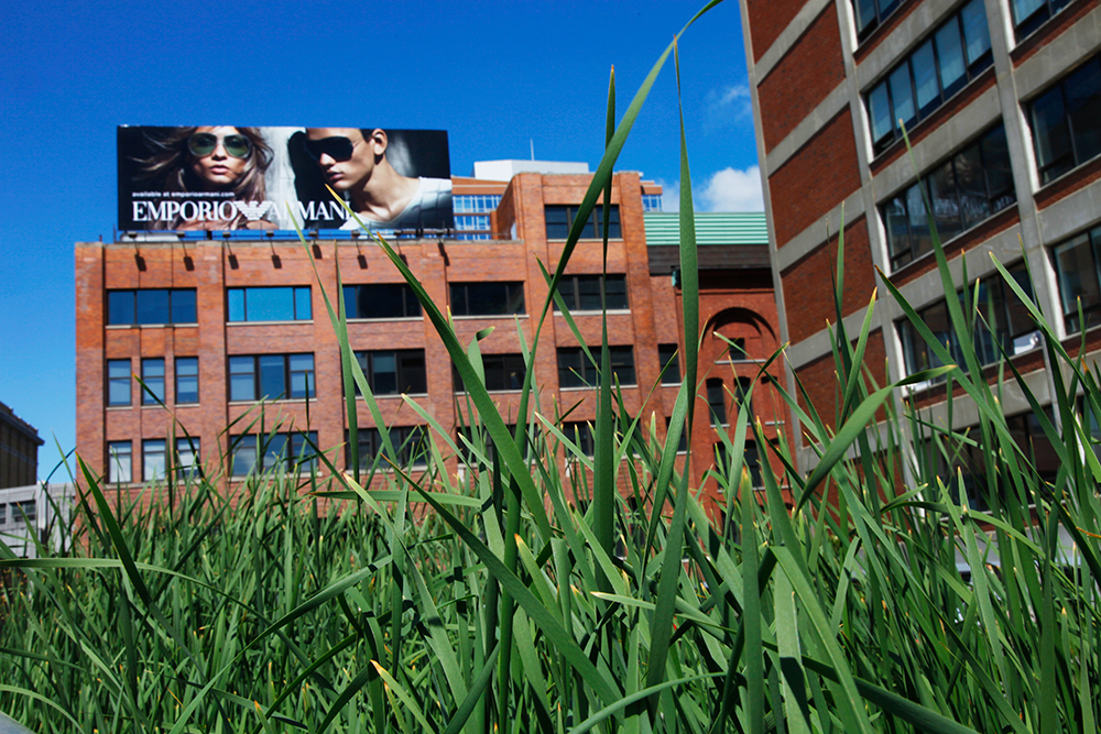 Grass and advertising. High line, New York 2011